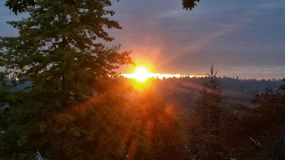 Setting Rays. Sunset peeking under clouds and through the trees Royalty Free Stock Photos