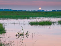 Setting sun. The sun is setting over a fresh water swamp Stock Image