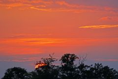 Setting sun and afterglow, some trees in front of sky. Telephoto, tripod royalty free stock image