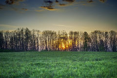 The setting sun behind trees Stock Photo