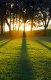 Setting sun casting tree shadows Stock Photos