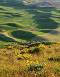 Setting sun creates long shadows on rolling hills Stock Photography