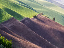 Setting sun creates long shadows on rolling hills Stock Images