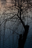The setting sun lake set off the mystery of the shadow of the tree Royalty Free Stock Images
