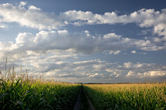 Setting Sun Over Corn Field And Dirt Road, Midwest, USA Royalty Free Stock Image