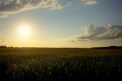 Setting Sun Over Corn Field, Midwest, USA Royalty Free Stock Photo