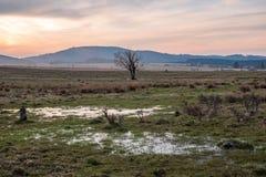 The setting sun over a wet meadow stock photos