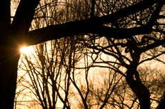 Setting sun peeking from behind bare tree Stock Photo