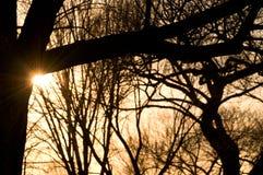 Setting sun peeking from behind bare tree stock photo