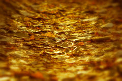 Setting sun rays on the fallen leaves Royalty Free Stock Photography