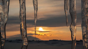Setting sun is reflected in icicles. Stock Photo