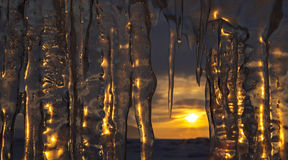 Setting sun is reflected in icicles. Stock Photography