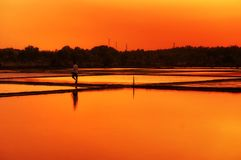 Can Gio Rice Paddy Sunset South Vietnam Stock Images