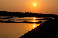 Setting sun on Rice Paddies of Vietnam. A setting sun reflecting off the water in rice paddies in Can Gio Vietnam Royalty Free Stock Photo