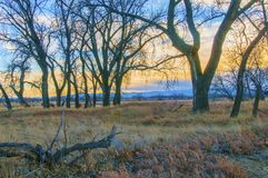 Setting Sun At Rocky Mountain Arsenal. Several deer amongst a group of bare trees, in a scenic field, with the sun setting behind the mountains. This image was stock image