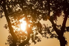 Setting sun shining through the branches of a tree Stock Image