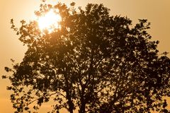 Setting sun shining through the branches of a tree Royalty Free Stock Photos