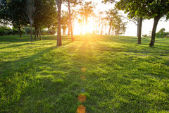 setting sun shining trees and grass Stock Photos