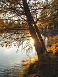 Setting sun on tree branches at shoreline Stock Photos