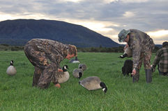 Setting up decoys Royalty Free Stock Image