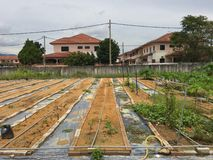 Setting up large scale home agriculture in your house garden Stock Photo