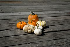 Setting up. On the dock all different color of pumpkins Stock Photos