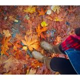 Settle down with me. A little piece of fall Royalty Free Stock Photos