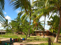 The settlement Lindi. Palm grove around. Stock Images