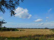 Settlement road. Stock Image