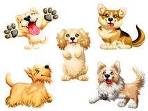 Setu pięć szczeniak pies na bielu Zdjęcia Royalty Free