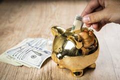Setzen 100 Dollar in ein Sparschwein Stockfotos