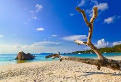 Setzen Sie Anse Lazio in Insel Praslin, Seychellen auf den Strand Lizenzfreie Stockbilder