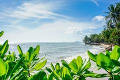 Setzen Sie Ansicht mit Niederlassungen von Bäumen auf Hintergrund des blauen Himmels auf den Strand Stockfotos