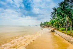 Setzen Sie Ansicht mit Niederlassungen von Bäumen auf klarem Hintergrund des blauen Himmels auf den Strand Stockfotografie