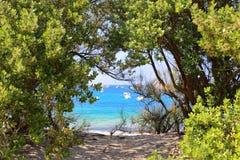 Setzen Sie in das Loch der Bäume auf den Strand Stockfotografie