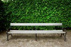 Setzen Sie in einem grünen Stadtgarten mit den Büschen auf die Bank Lizenzfreie Stockfotos