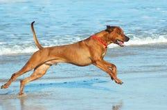Setzen Sie Hund auf den Strand stockfotos