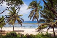 Setzen Sie in Kenia auf den Strand lizenzfreies stockfoto