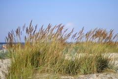 Setzen Sie Meer und Dünen mit Gras unter blauem Himmel auf den Strand stockbilder