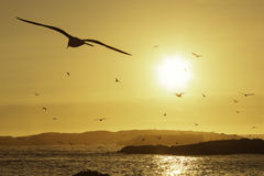 Setzen Sie mit den Seemöwen auf den Strand, die in den Himmel bei Sonnenuntergang fliegen. lizenzfreie stockbilder