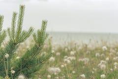 Setzen Sie mit Gras an einem regnerischen Tag im wolkigen Wetter auf den Strand stockbild