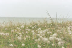 Setzen Sie mit Gras an einem regnerischen Tag im wolkigen Wetter auf den Strand lizenzfreie stockbilder