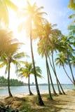 Setzen Sie mit hohen Kokosnussbäumen gegen blauen Himmel vor Westküste von Myanmar auf den Strand Lizenzfreies Stockbild