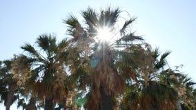 Setzen Sie mit Palmen, in Mittelmeer auf den Strand stock video footage