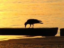 Setzen Sie mit Vogel- und Sonnenozeansonnenuntergangsonnenaufgang auf den Strand Stockbilder