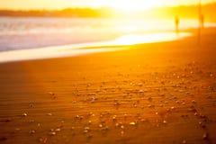 Setzen Sie Nahaufnahme in den Strahlen der untergehenden Sonne auf den Strand Stockbilder