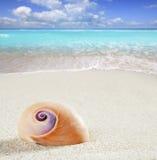 Setzen Sie Sandnahaufnahmemakro der Seeschnecke tropisches weißes auf den Strand Stockfotografie