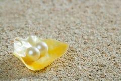 Setzen Sie Sandperle auf dem gelben Shellsommer tropisch auf den Strand Lizenzfreies Stockbild