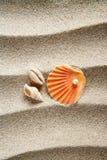 Setzen Sie Sandperlenmuschelshell-Sommerferien auf den Strand Stockfotografie