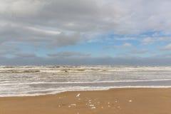Setzen Sie Schaum 3 Egmond aan Zee, die Niederlande auf den Strand stockfotos